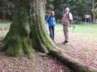 Gros chêne planté par les mennonites en 1793