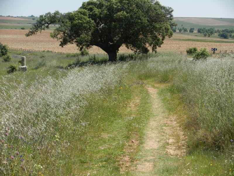 Le Camino jalonné d'une borne milliaire romaine (Castille et Léon) - © Jacques Dubucq