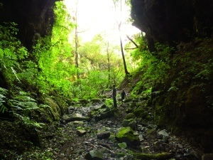 Sur le chemin du Bajo Chorro