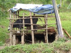 Baraque à vaches