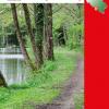 Osez la nature aux sources de la forêt de Chimay !